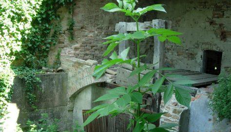 scodellino1