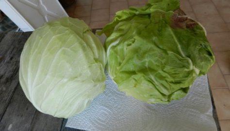 Nel semenzaio, insalata e zucchine
