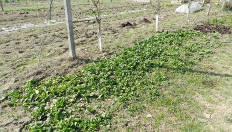 Si semina cipolla, spinaci, insalata