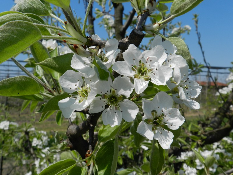 Orto le semine di aprile domenico sportelli for Semina a spaglio