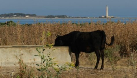 San Vito Lo Capo - il Faro