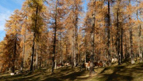 Cortina DAmpezzo - Rio Gere