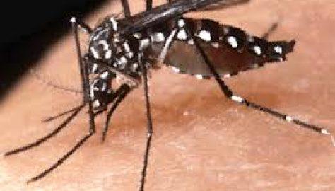 Come va con la zanzare tigre?