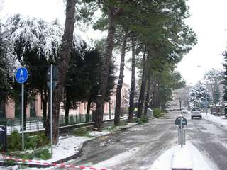 I pini di viale Roma colpiti dalla neve