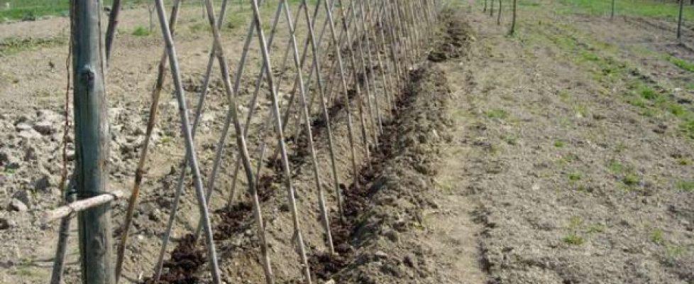 Come sostengo le piante di pomodoro