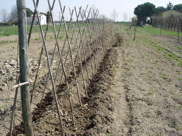 Come sostengo le piante di pomodoro domenico sportelli for Piantare pomodori
