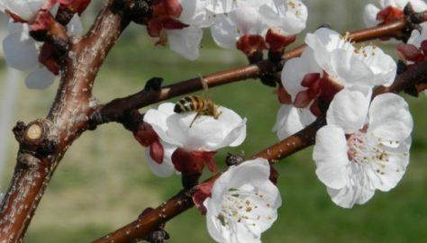 Comincia la stagione dei fiori