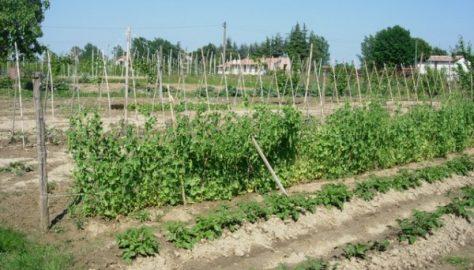 A dimora i pomodori da conserva