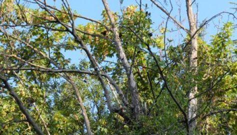 Asilo nido, quell'albero secco può essere pericoloso