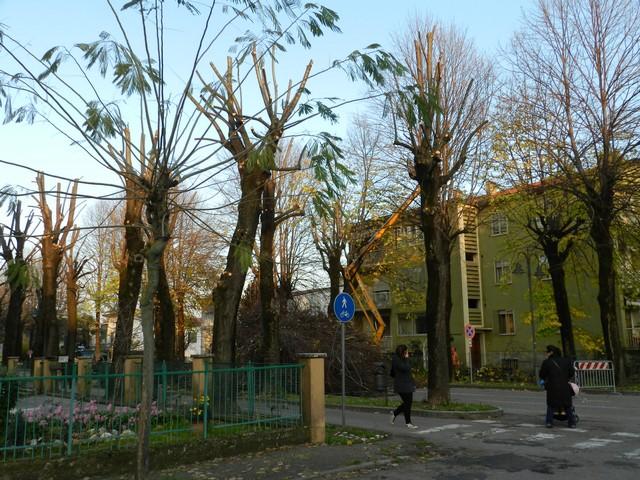 Trattare gli alberi con scienza e coscienza