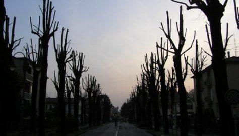 Ancora un pesante intervento su alberi