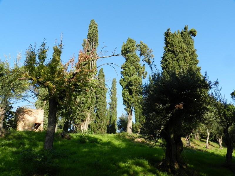 Castel Bolognese - Cipressi della Serra