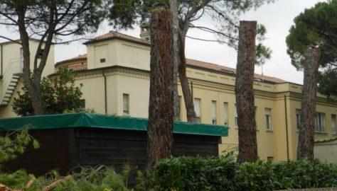 Castel Bolognese - Pini abbattuti nel Parco dell