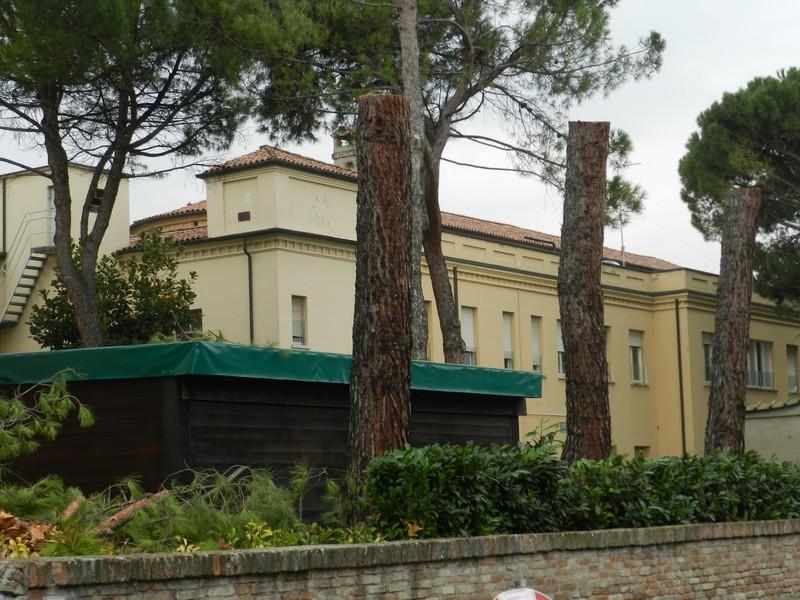 Castel Bolognese - Pini abbattuti nel Parco dell'ex - Ospedale