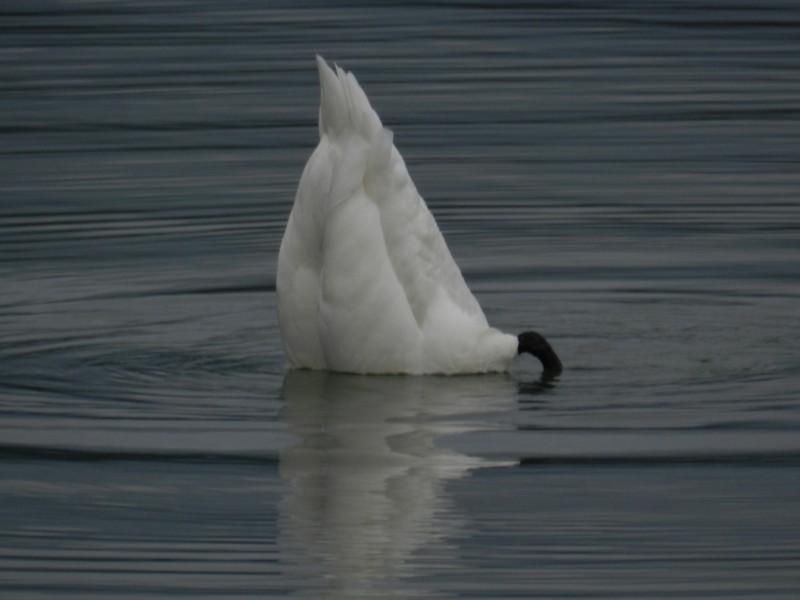Le Bourget de lac (2)