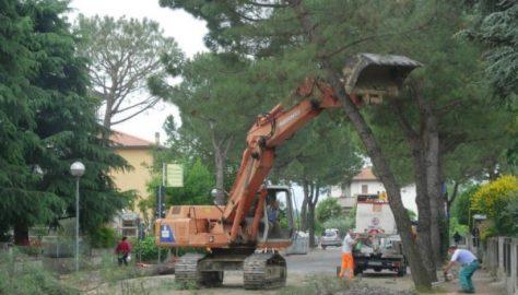 Con tanti alberi città più sane, belle e sicure