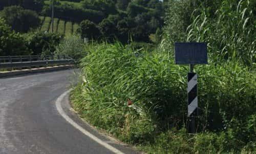 A Tebano erba alta toglie visuale sulla strada e causa pericoli